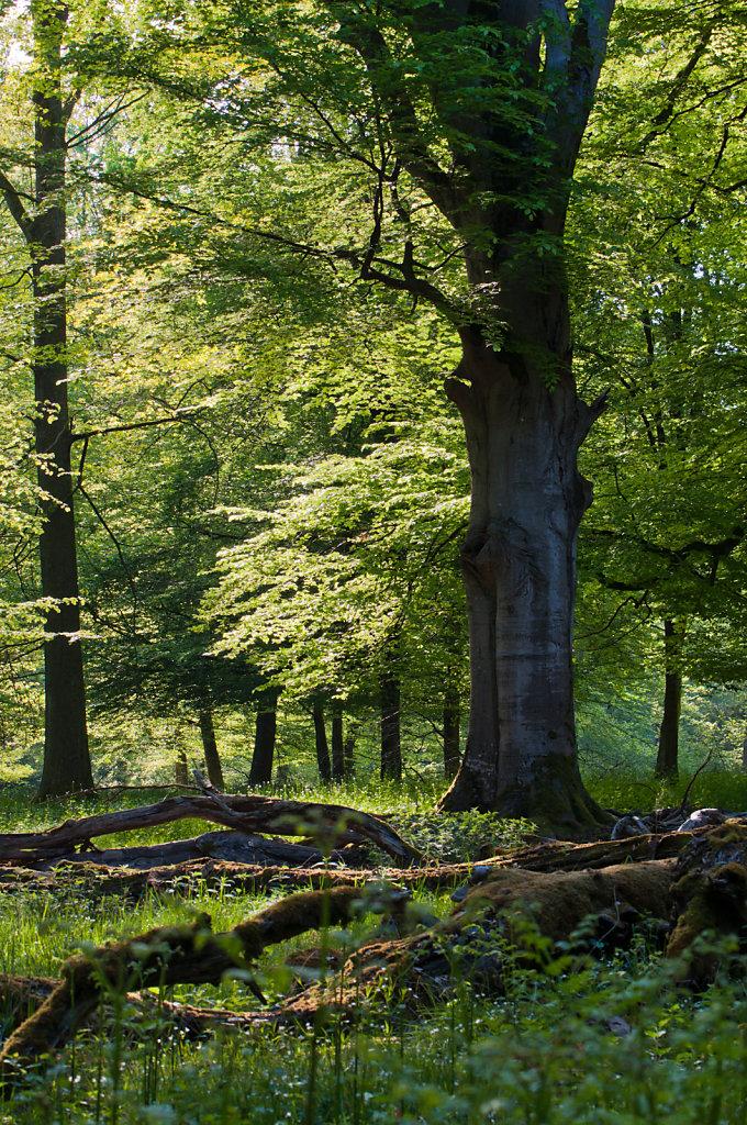 Rotwildpark Stuttgart forest