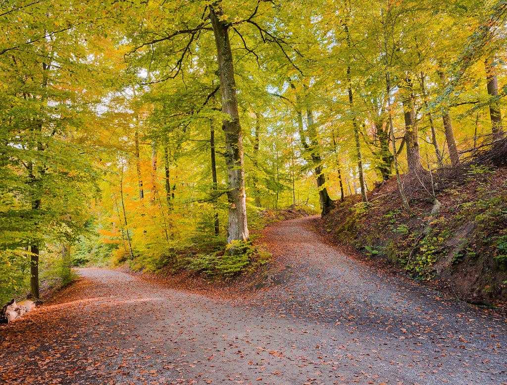 Waldweg am Neuen See, Naturschutzgebiet Rotwildpark, Stuttgart-Vaihingen